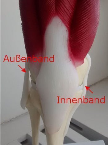 Seitenband im Knie