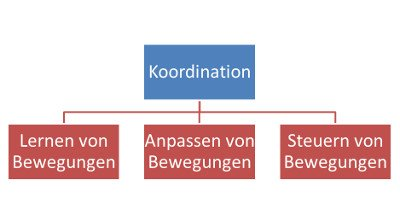 Aufbautraining nach Kreuzbandriss - Koordination
